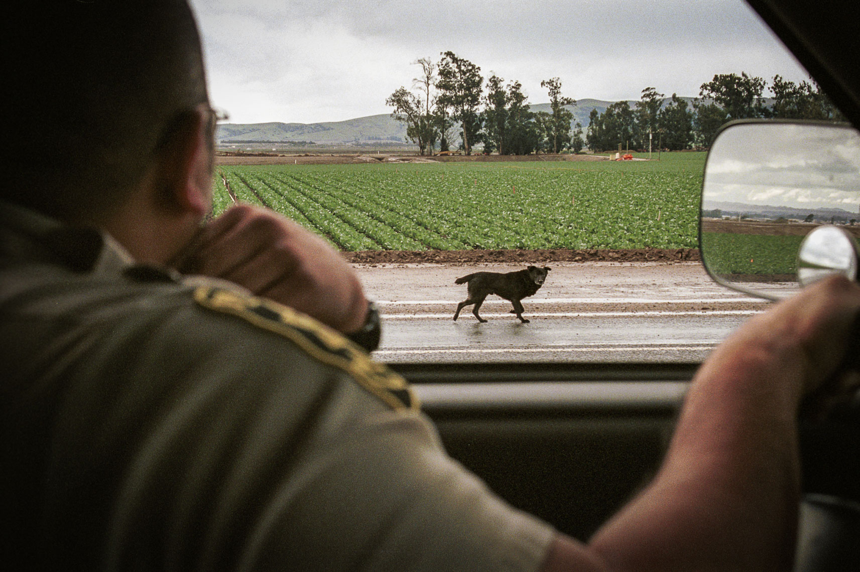 patrick_cavan_brown_dog_catcher_pound_animal_control-13