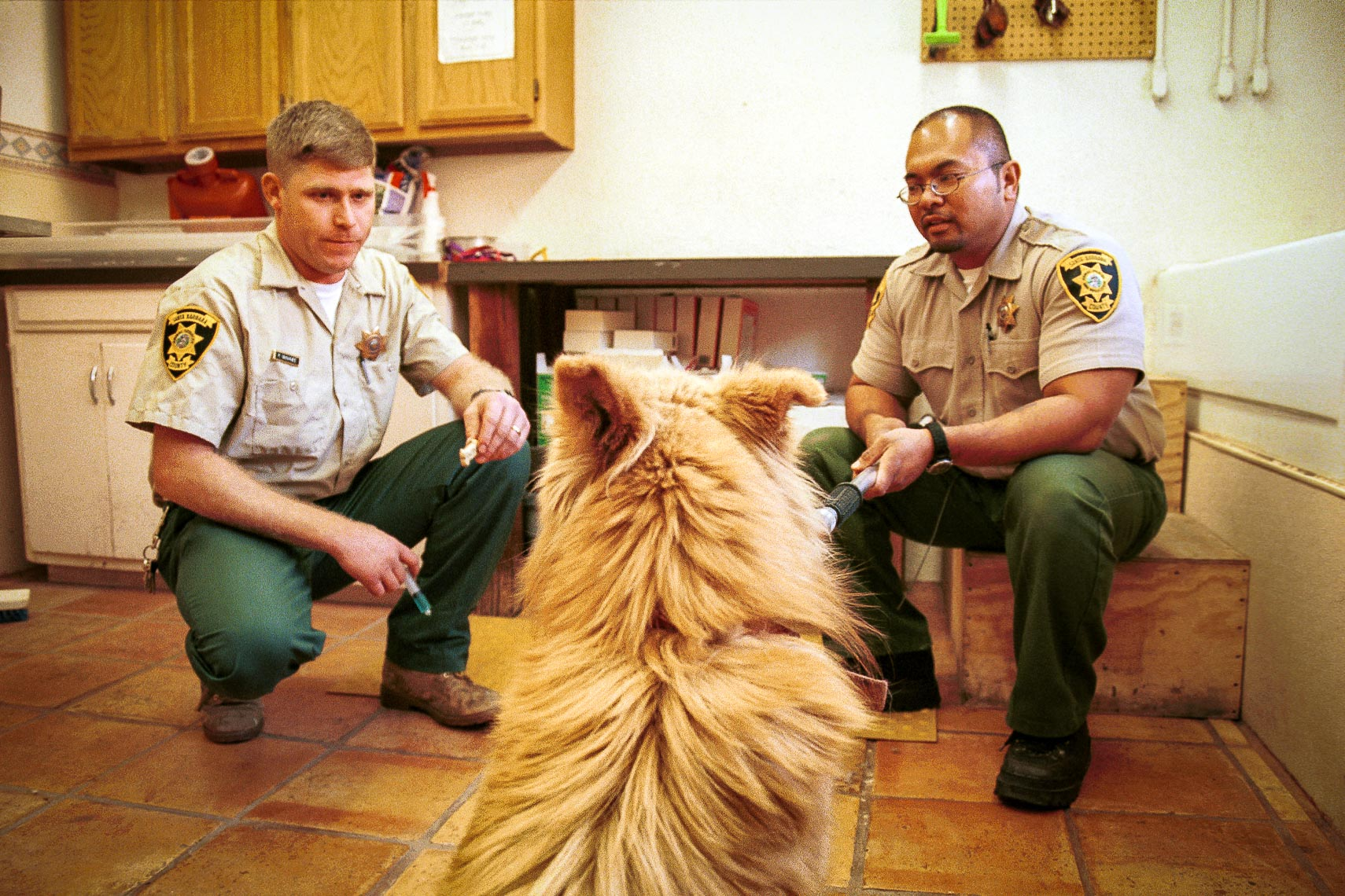 patrick_cavan_brown_dog_catcher_pound_animal_control-19