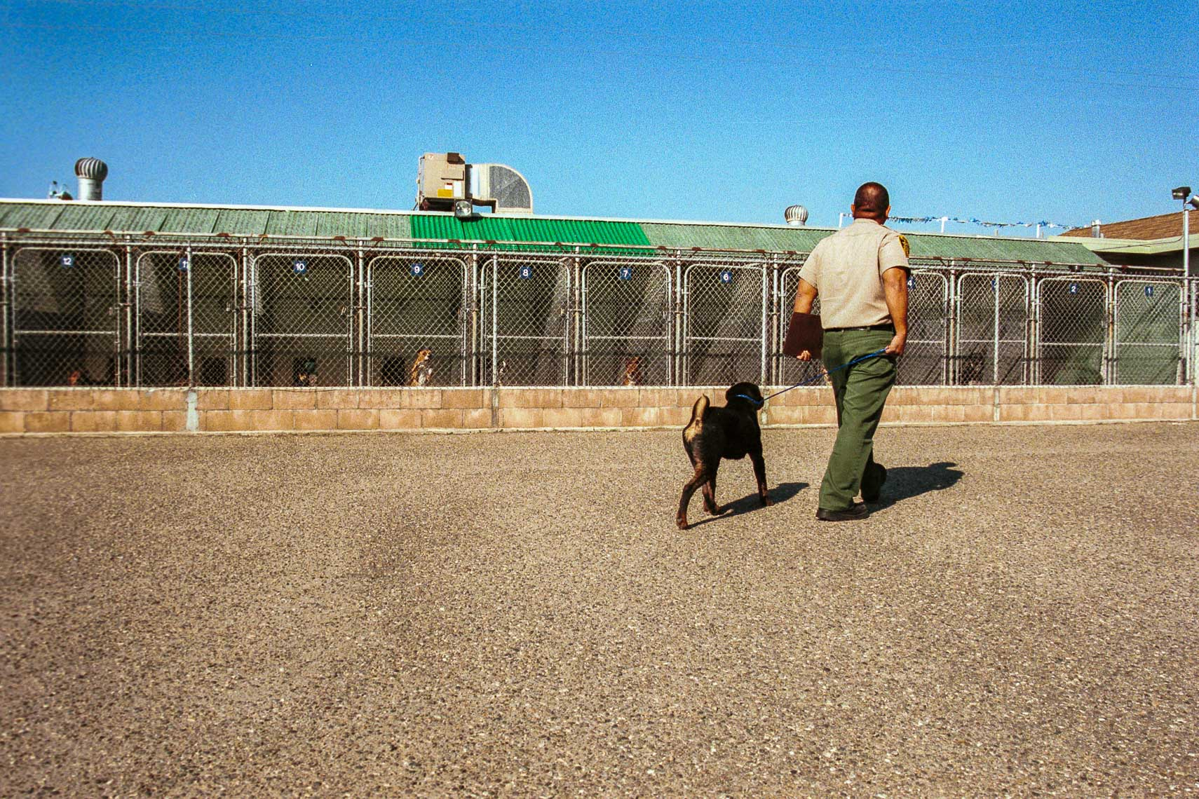 patrick_cavan_brown_dog_catcher_pound_animal_control-29