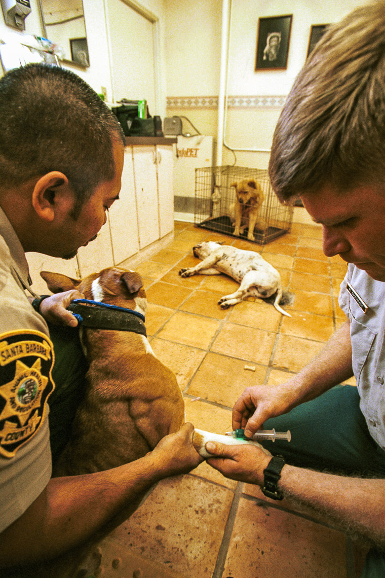 patrick_cavan_brown_dog_catcher_pound_animal_control-3